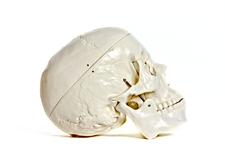 osteo: Medical learning skull laying on a white background