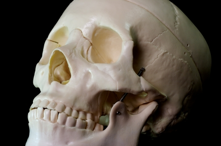 Medical learning skull laying on a black background Stock Photo