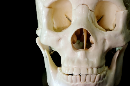 lacrimal: Medical learning skull laying on a black background Stock Photo