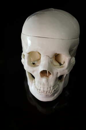 osteo: Medical learning skull laying on a black background Stock Photo