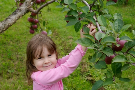 Little girl dressed in pink and picking apples in an appletree Stock Photo
