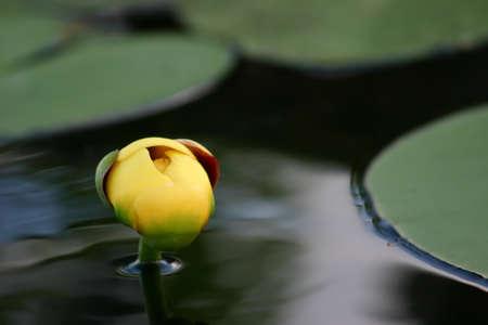 Peaceful water flora Stock Photo