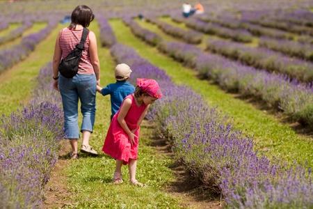 Family enjoying a walk in a lavender field