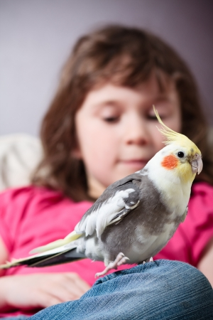 Cute little girl with a pet cockatiel on her knee Stock Photo