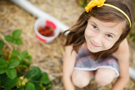 Cute little girl picking strawberries photo