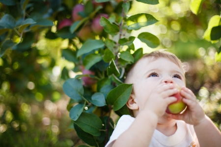 Baby eating a red apple in an orchard Stock Photo