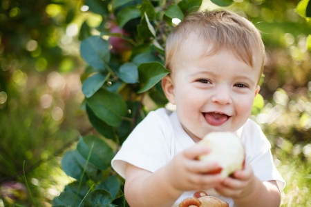 Baby eating a red apple in an orchard photo