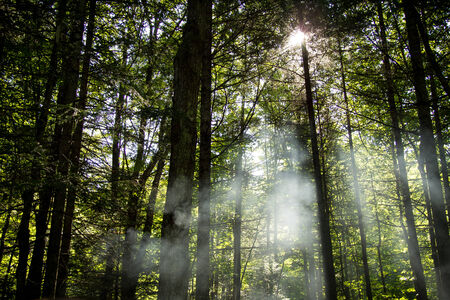 Fog in a forest on a sunny day