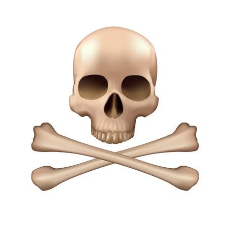 Realistic vector skull and bones