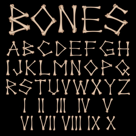 Bones Alphabet and numbers vector Vector