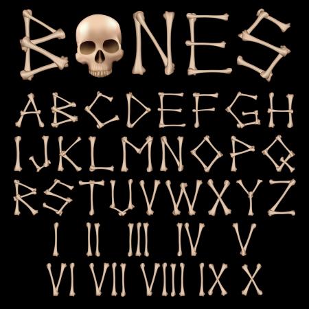human bones: Bones Vector del alfabeto