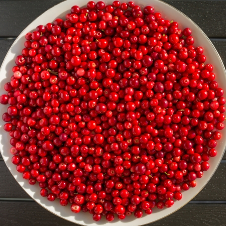 Fresh red cranberries on a black table