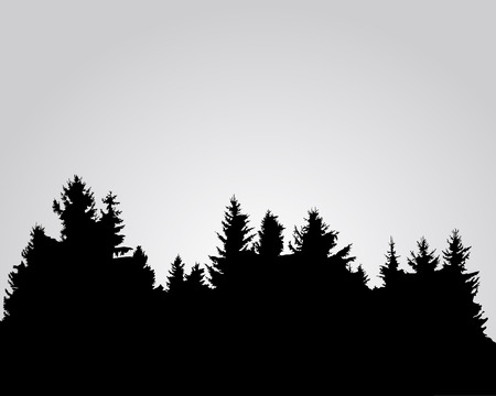 spruce: Silhouette of spruce forest