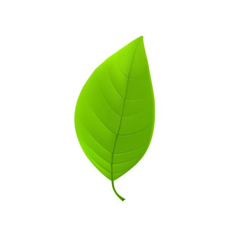 leaf: Green leaf