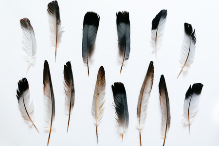 Feathers of the bird on white  Foto de archivo