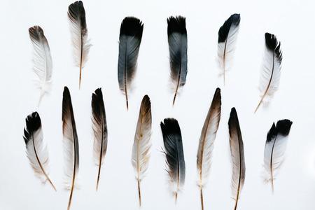 pluma: Las plumas del pájaro en blanco Foto de archivo