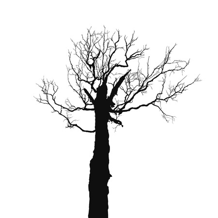 leafless: Silhouette old dry tree