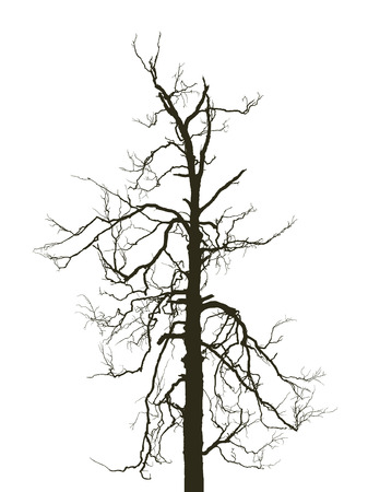 horrible: horrible birch Illustration