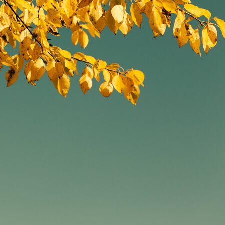 estado del tiempo: Tiempo de oto�o las hojas amarillas de los �rboles contra el cielo azul Foto de archivo