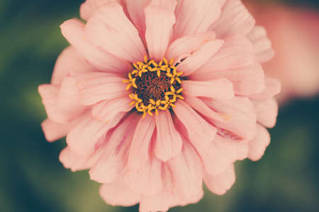 color photo: Color photo close-up of beautiful colorful flower. Stock Photo