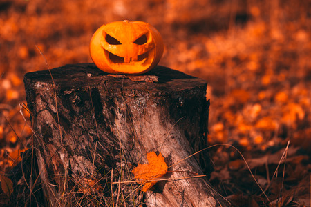 color photo: Color photo outdoors closeup halloween pumpkin in forest.