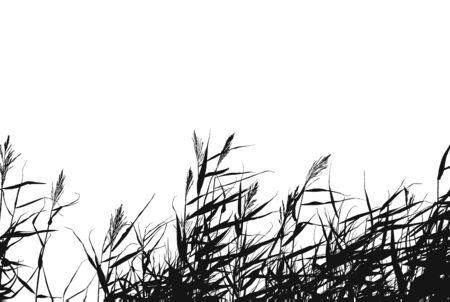 Schwarz-Weiß-Vektor von Roggen auf einem weißen Hintergrund. Standard-Bild - 47455250