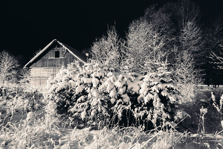 dreary: Snow on the branches of trees and bushes at night.