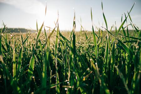 no body: Field of grass close up photo. Summer season. Stock Photo