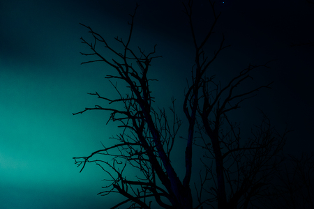 toter baum: Silhouette old dry dead tree on blue background at night