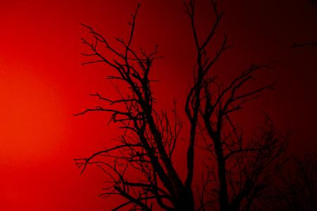 toter baum: Silhouette old dry dead tree on red background at night Lizenzfreie Bilder