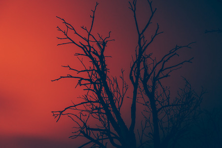 quemado: silhouette dry dead tree on a background of wildfire