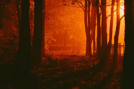 Gloomy autumnal desolate park in the fog at night Stock Photo