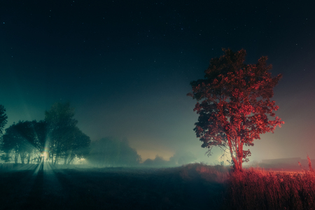 Big old maple tree near the road in a foggy autumn night.