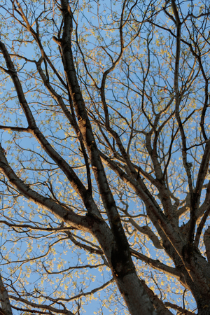 dry tree branches against the sky