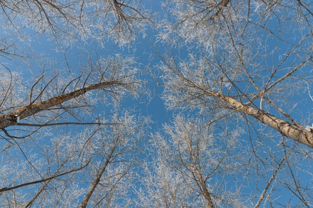 snow on branches against the blue sky Stock Photo