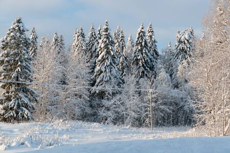 cold and winter landscapes with snow in Russia