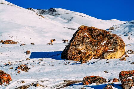 two horses on a snow mountain in the daytime Imagens
