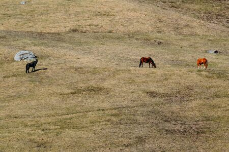 several horses and hills in the daytime