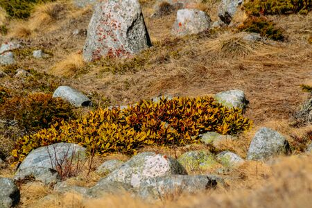 stones and vegetation in the highlands in the daytime