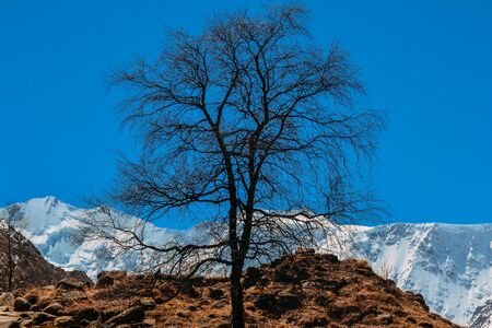 old dry tree on the mountain against the blue sky. Imagens