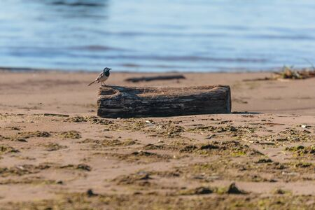 bird on a wooden bar against the sea