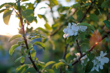 small white flowers on a branch of a plant Imagens