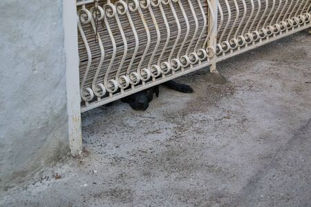 black dog looks out from under the iron fence