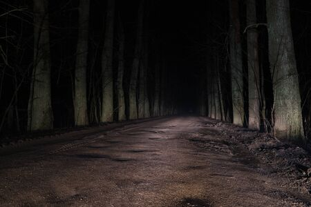 terrible mysterious road through the forest at night