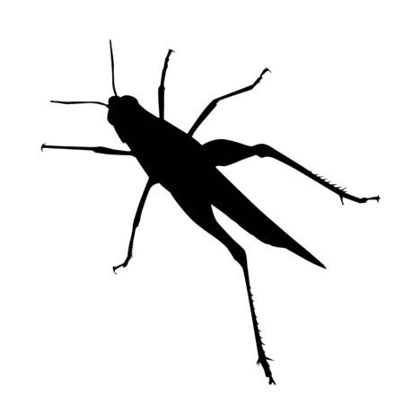 grasshopper vector silhouette on white isolated background Çizim