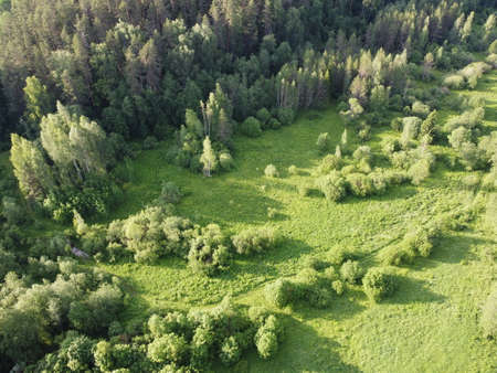 meadow in the green summer forest aerial photo