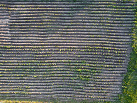 Aerial view of field stubble from drone