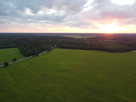summer green forest in the rays of the setting sun aerial photography