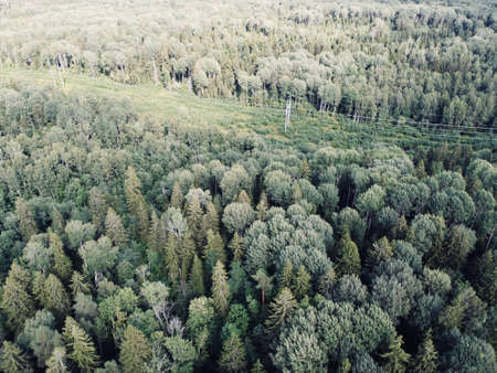 summer green dense forest aerial photography 版權商用圖片