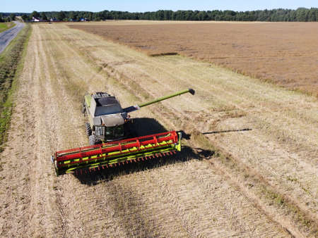 large harvester on a rapeseed field on a bright sunny day aerial photo
